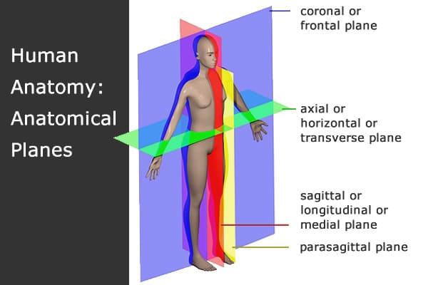 Restorative fitness anatomy planes